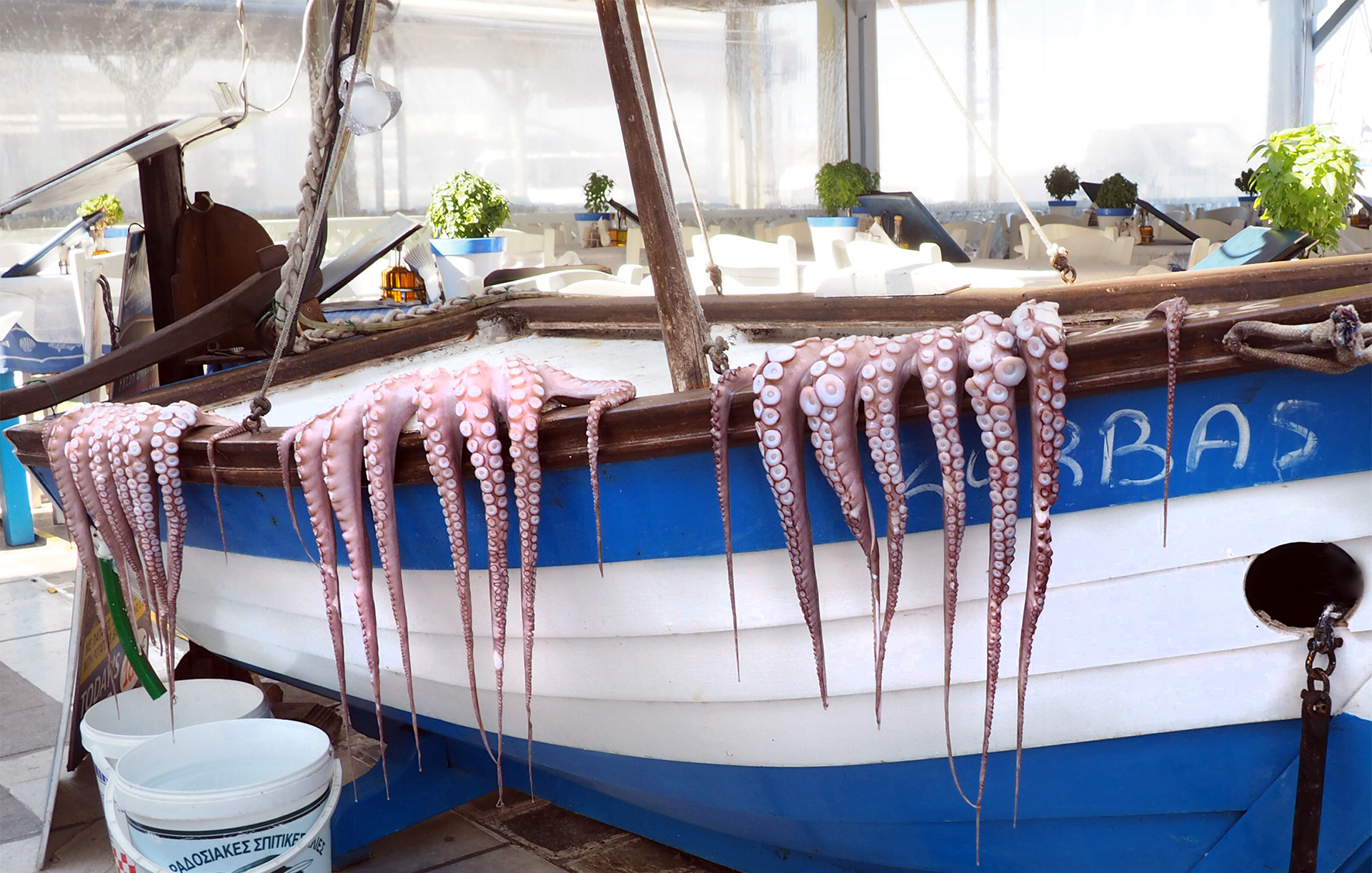 Octopus hanging to dry to prepare for one of Naxos greek food specialties
