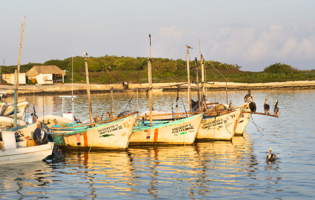 Five pelicans are sitting on a boat waiting in the morning light for the fishermen to return with breakfast