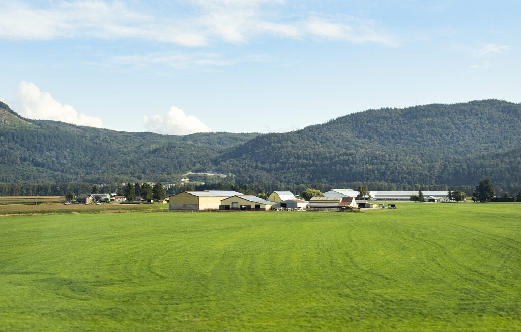 Bright green farm field and buildings as seen in August in the Lower Mainland of British Columbia